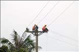 PC Hải Dương: Điện lực Gia Lộc tìm mọi giải pháp giảm thiểu vi phạm hành lang