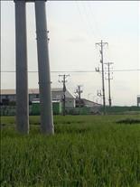 Nhiều khó khăn trong thi công dự án lưới điện tại Hải Dương